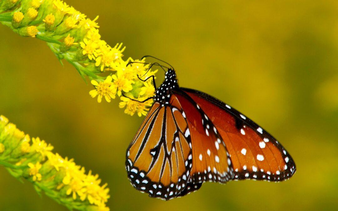 NOTICIAS DE NATURALEZA. ¿Te gustan las mariposas? Mándanos tu foto