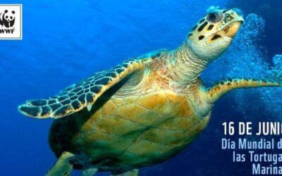16 de junio Día Mundial de la Tortuga Marina