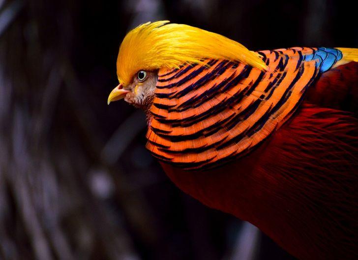 Animales curiosos y hermosos
