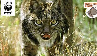 Observando la naturaleza con la webcam de WWF