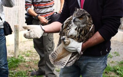 Centro de  Recuperación de Fauna Silvestre Las Dunas. Entrevista a Jaime, su responsable.